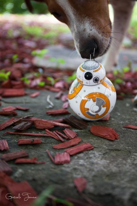 BB-8-(5)