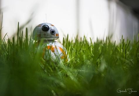 BB-8-(7)